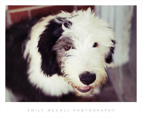 Murphy1